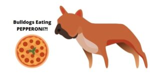can french bulldogs eat pizza