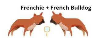 frenchie vs french bulldog
