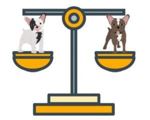 frenchies vs french bulldog