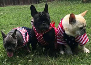hog wild frenchies