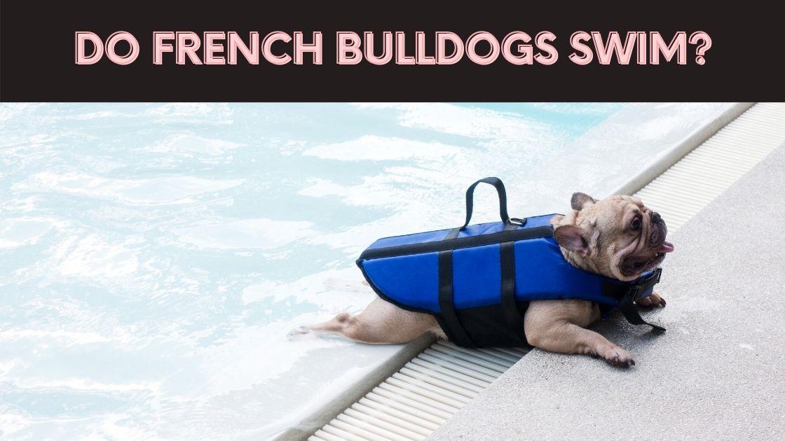 do french bulldogs swim