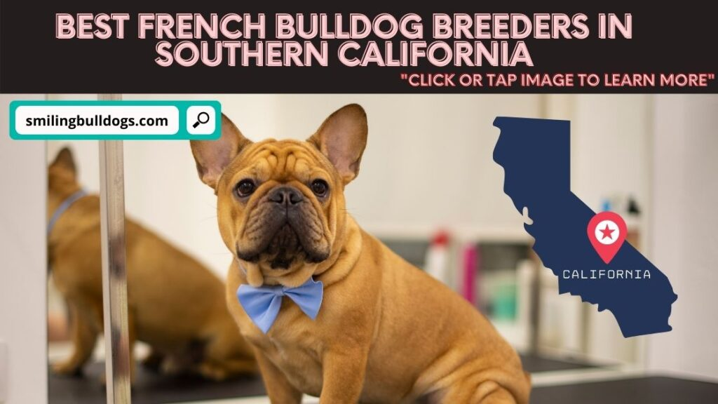 french bulldog breeders in souther california