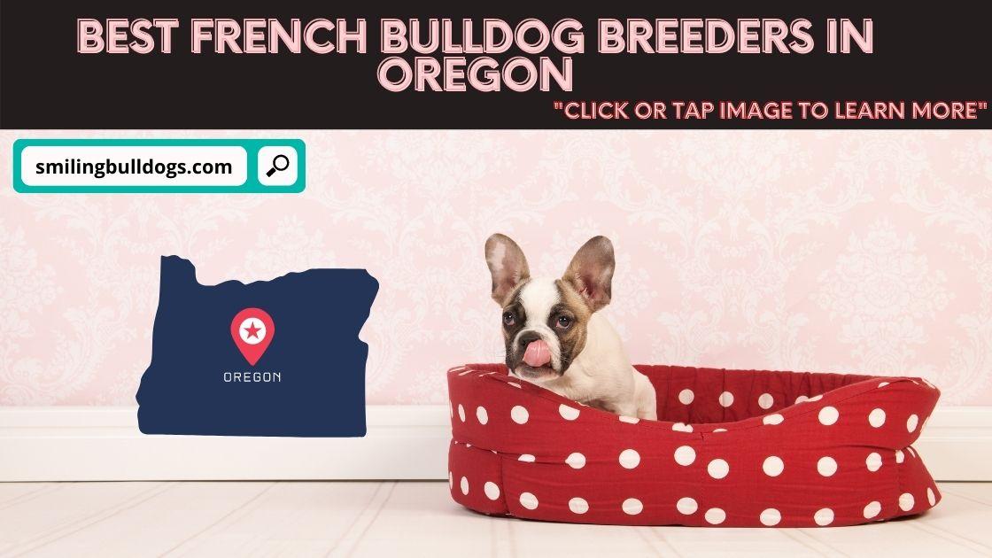 french bulldog breeders in oregon