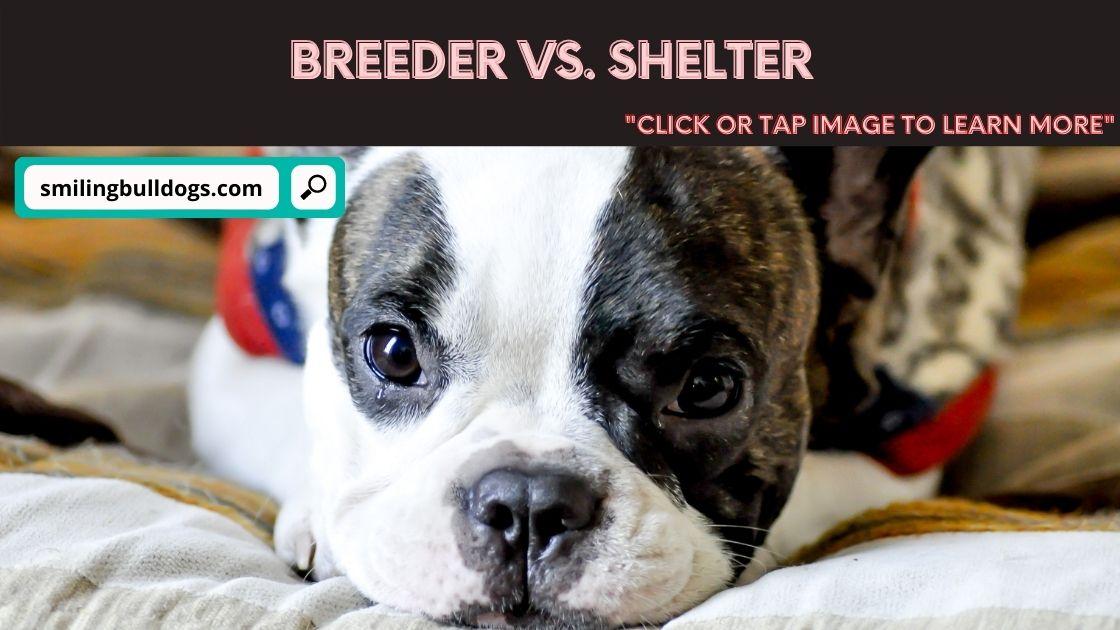 breeder vs. shelter