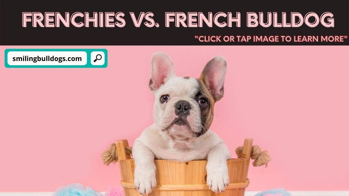 Frenchies Vs. French Bulldog