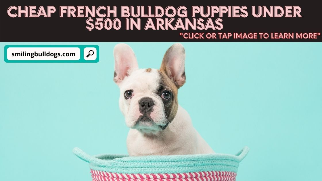 Cheap French Bulldog Puppies Under $500 In Arkansas