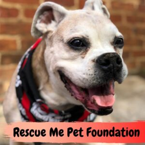 Rescue Me Pet Foundation Review