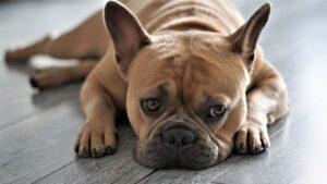 Kansas Humane Society Review