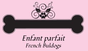 enfant parfait french bulldogs