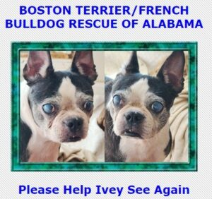 Boston Terrier French Bulldog Rescue of Alabama