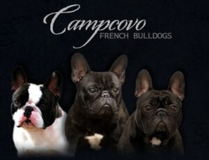 Campcovo French Bulldogs