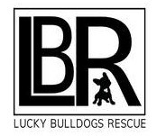 lucky bulldog rescue