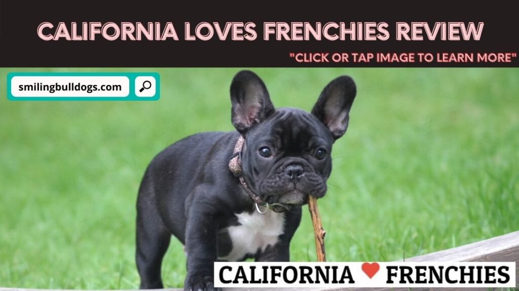 California Loves Frenchies