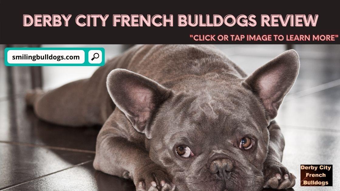 derby city french bulldogs
