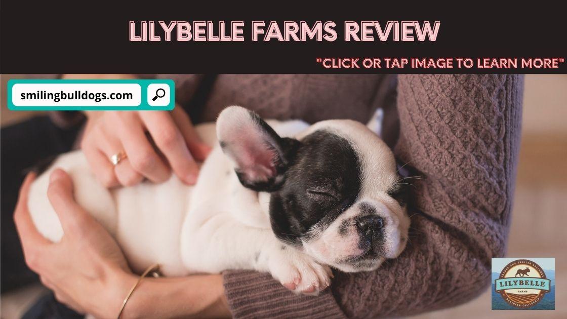 lilybelle farms
