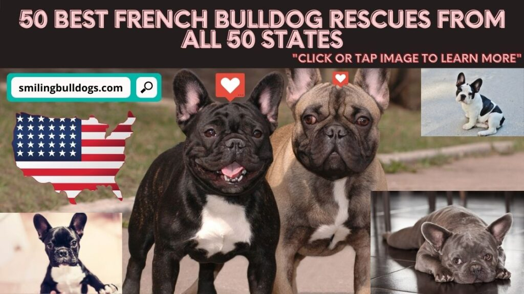best french bulldog rescues