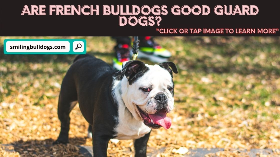 are french bulldogs good guard dogs