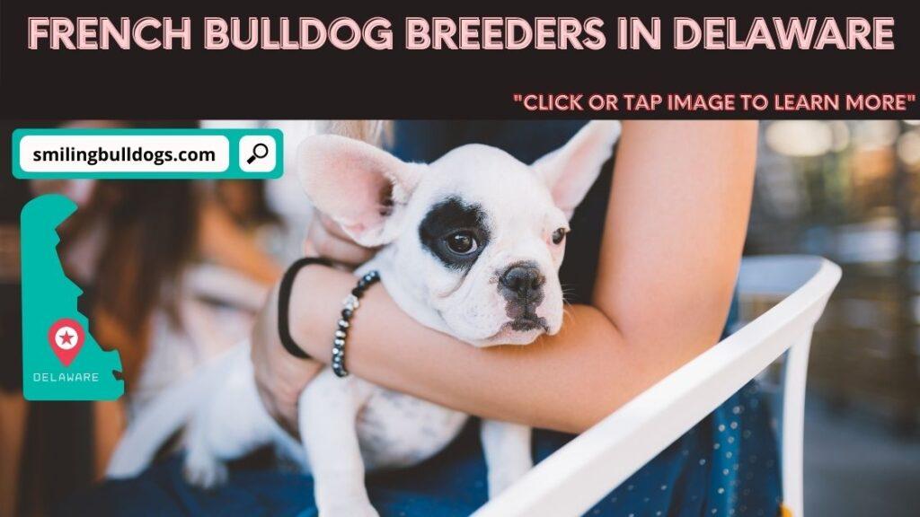 french bulldog breeders in delaware