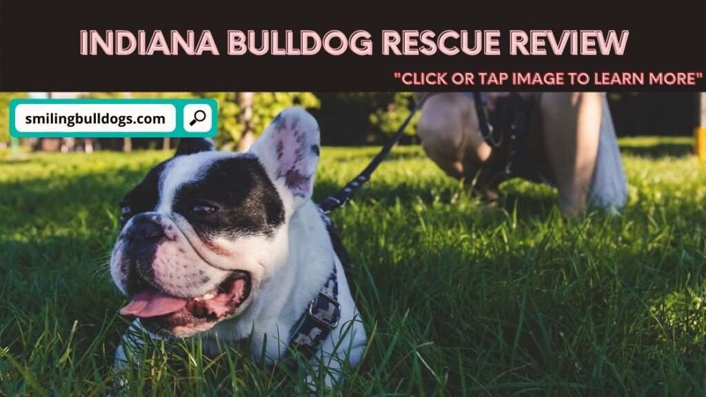 Indiana Bulldog Rescue Review