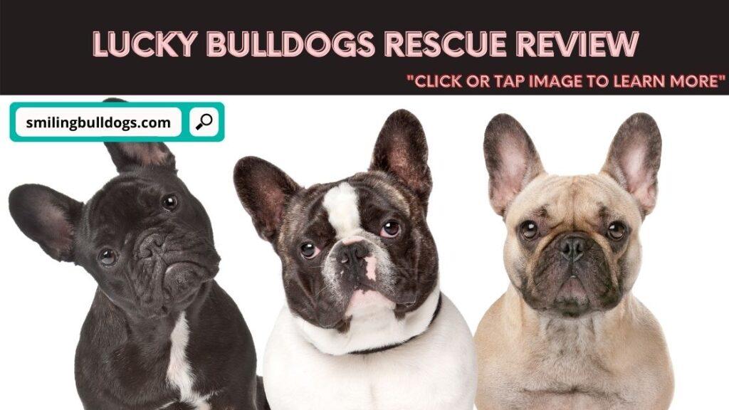 Lucky Bulldogs Rescue Review