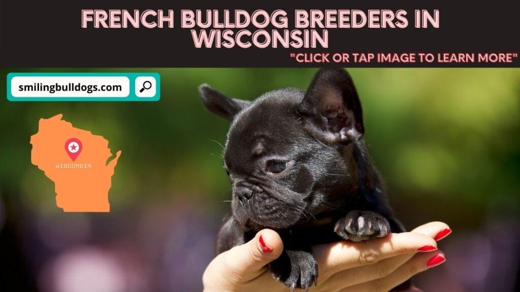 french bulldog breeders in wisconsin