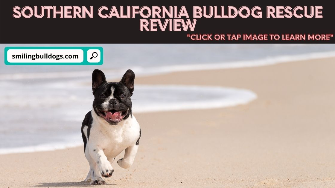Southern California Bulldog Rescue Review