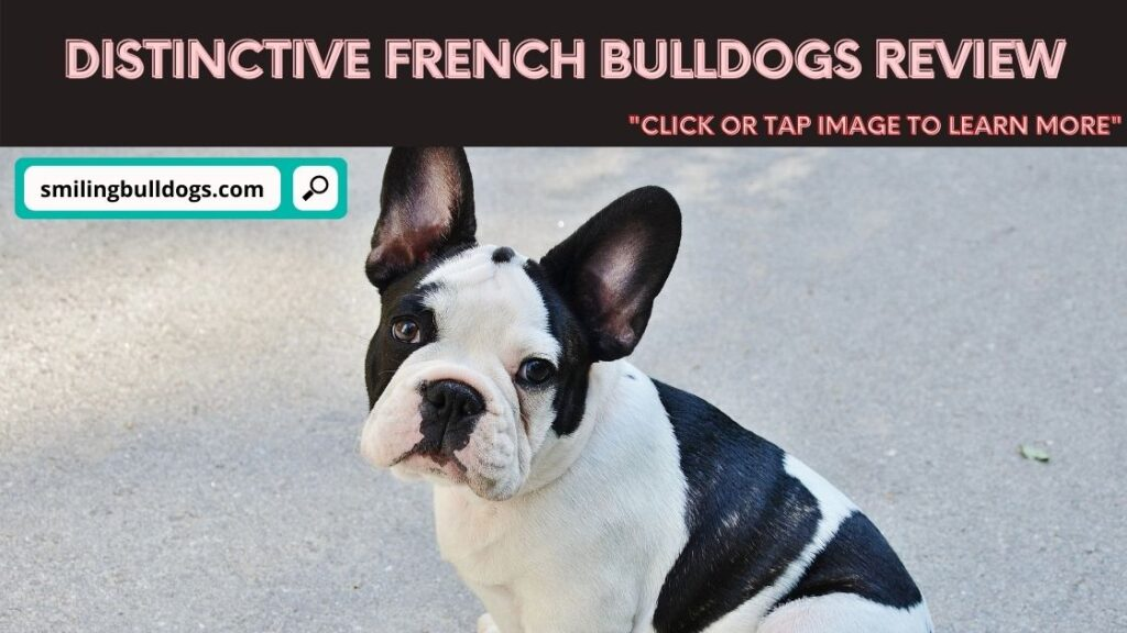 distinctive french bulldogs