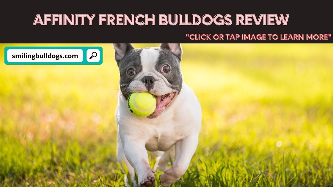 Affinity French Bulldogs Review
