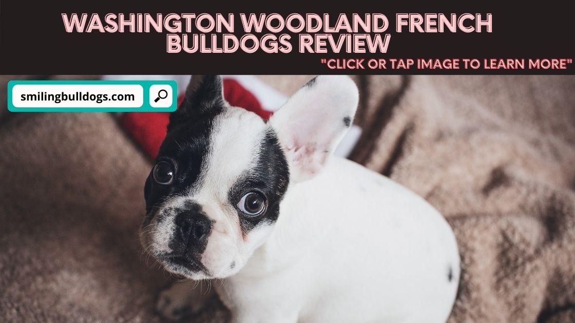 Washington Woodland French Bulldogs Review