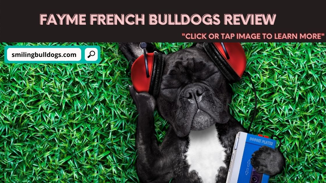 Fayme French Bulldogs Review