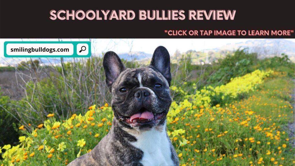 Schoolyard Bullies Review