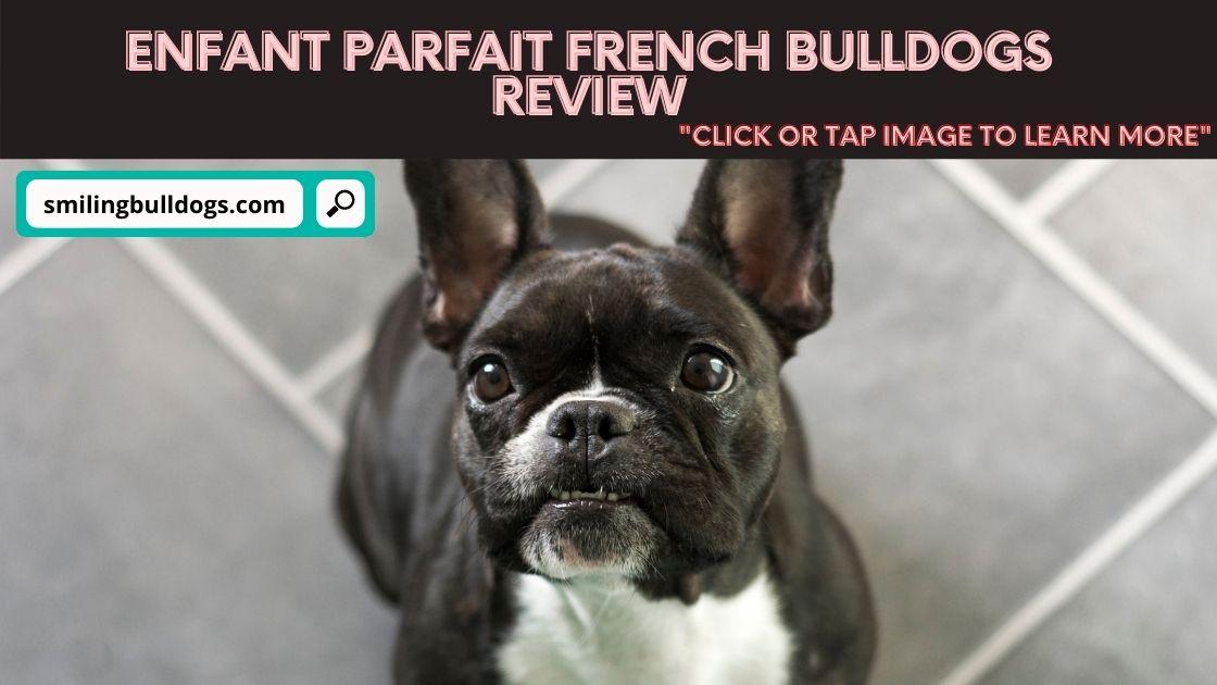 Enfant Parfait French Bulldogs Review