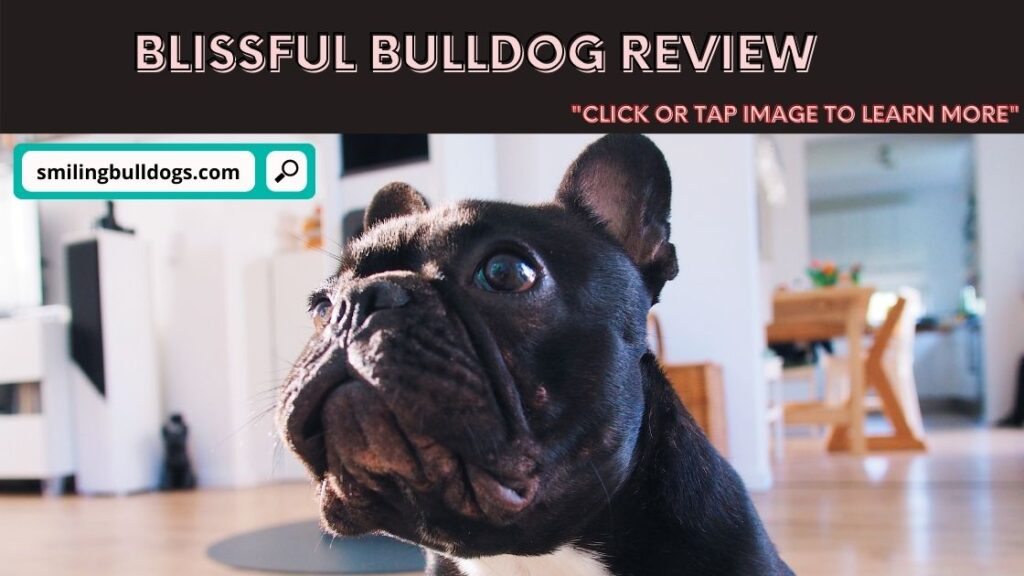 Blissful Bulldog Review