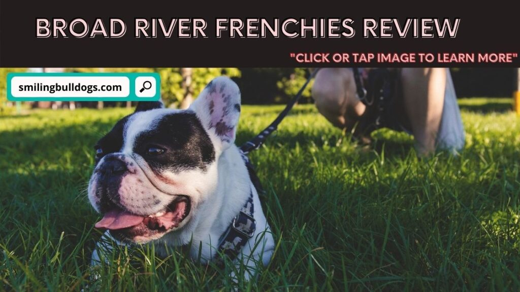 broad river frenchies review
