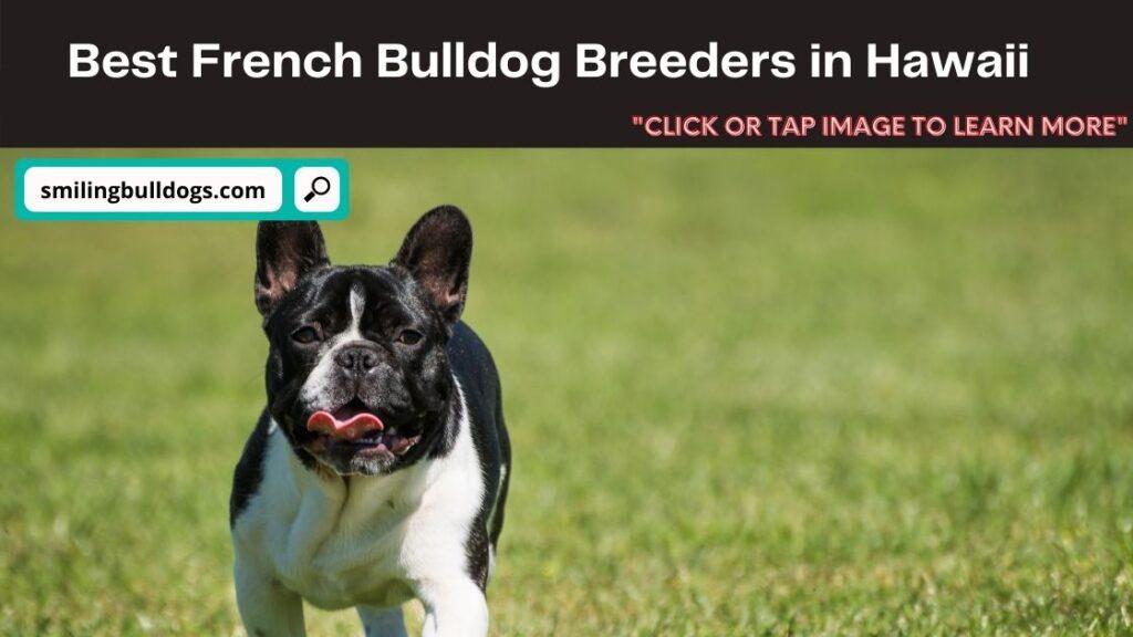 French Bulldog Breeders in Hawaii