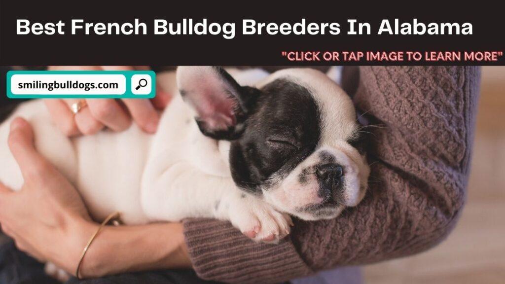 French Bulldog Breeders In Alabama!