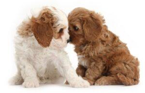 Uptown Puppies