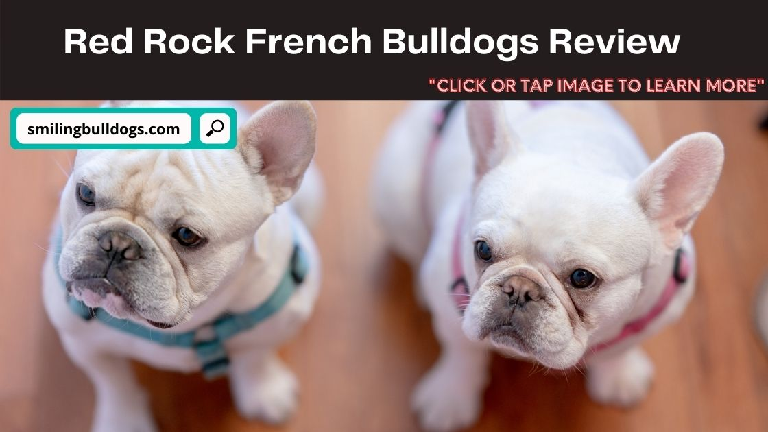 Red Rock French Bulldogs Review
