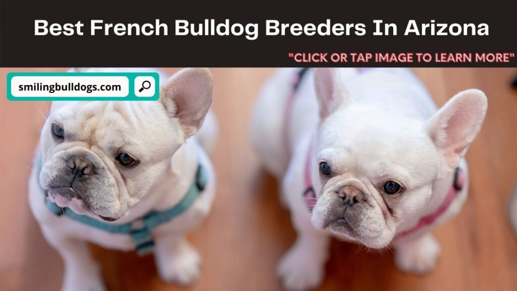 French Bulldog Breeders In Arizona