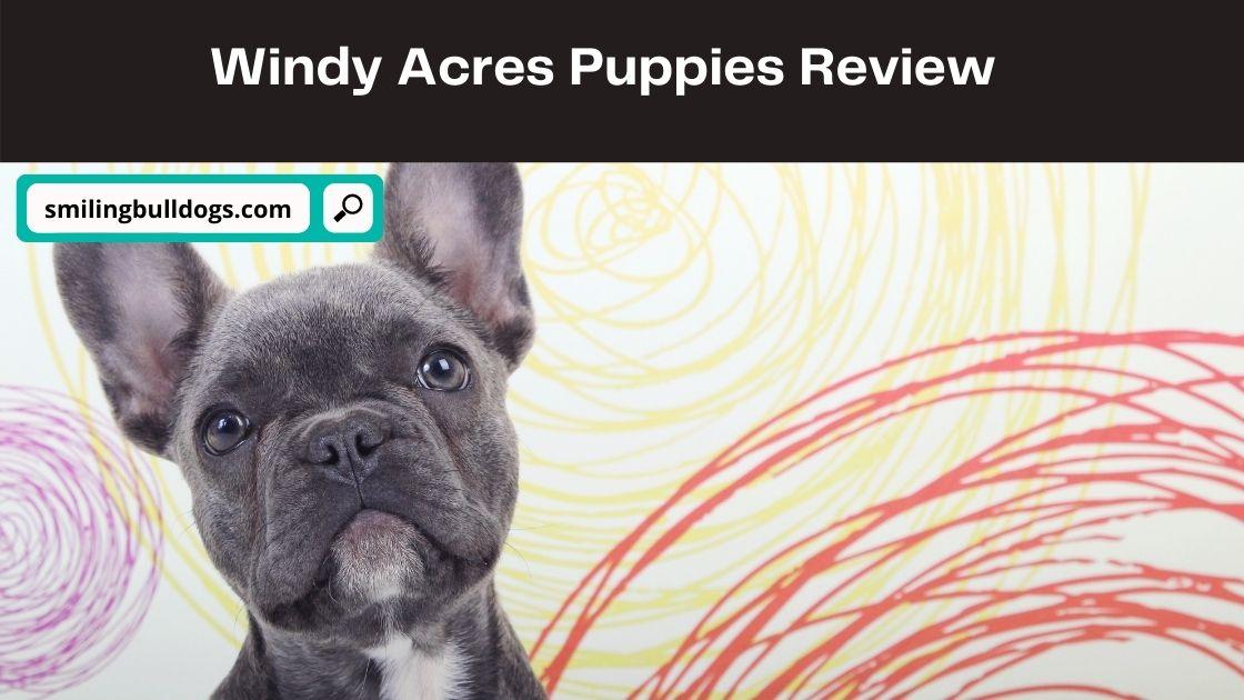 Windy Acres Puppies
